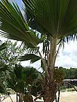 Foto Antigua Antigua_033