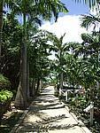Foto Antigua Antigua_034