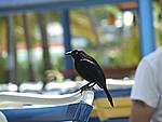 Foto Antigua Antigua_042
