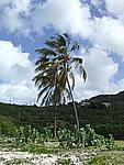 Foto Antigua Antigua_128