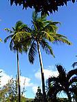 Foto Antigua Antigua_136