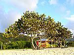 Foto Antigua Antigua_180