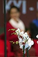 Foto Aung San Suu Kyi a Parma - 2013 Aung_San_Suu_Kyi_068
