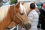 Foto Autunnando di Valle in Valle 2007 Autunnando_2007_090