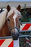 Foto Autunnando di Valle in Valle 2007 Autunnando_2007_091