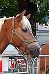 Foto Autunnando di Valle in Valle 2007 Autunnando_2007_092