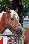 Foto Autunnando di Valle in Valle 2007 Autunnando_2007_093
