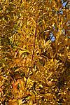 Foto Bedonia - Autunno 2008 Bedonia_Autunno_2008_004