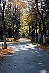 Foto Bedonia - Autunno 2008 Bedonia_Autunno_2008_015