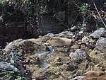Foto Bedonia - Ceio e Acqua solforosa Ceio di Bedonia 034