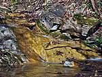 Foto Bedonia - Ceio e Acqua solforosa Ceio di Bedonia 044