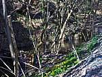 Foto Bedonia - Ceio e Acqua solforosa Ceio di Bedonia 088