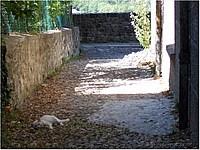 Foto Bedonia - Scorci ricordi_bedonia_215