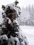 Foto Bedonia 2004 Bedonia sotto la neve 2005 003