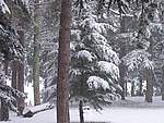 Foto Bedonia 2004 Bedonia sotto la neve 2005 009
