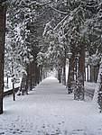 Foto Bedonia 2004 Bedonia sotto la neve 2005 016