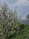 Foto Borgotaro - Belforte Belforte di Borgotaro Parma 063