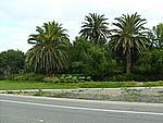Foto California 2008 California_112