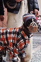 Foto Carnevale Borgotarese 2010 Carnevale_Borgotaro_2010_192