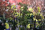 Foto Carnevale in piazza 2009 by Manuel Carnevale_Bedonia_2009_068