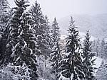 Foto Compiano 2004 Compiano sotto la neve 2005 21