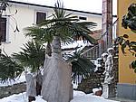 Foto Compiano 2004 Compiano sotto la neve 35