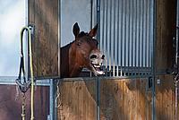 Foto Equitazione 2008 - Borgotaro Equitazione_048