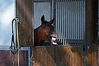 Foto Equitazione 2008 - Borgotaro Equitazione_050