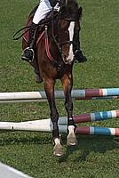 Foto Equitazione 2008 Equitazione_042