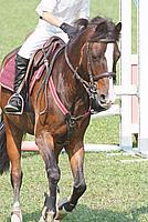 Foto Equitazione 2008 Equitazione_043