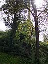 Foto Estate 2004 Estate 2004 063