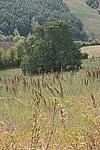 Foto Estate 2007 Estate_2007_025