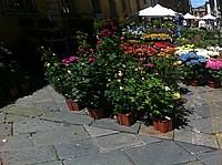Foto Festa dei Fiori 2013 - Parma Parma_Fiori_2013_002