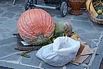 Foto Festa della Castagna 2008 - Folta Autunno_a_Folta_2008_008
