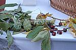 Foto Festa della Castagna 2008 - Folta Autunno_a_Folta_2008_009
