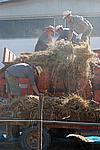 Foto Fiera del Fungo di Albareto 2007 Fungo_di_Albareto_2006_060