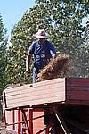 Foto Fiera del Fungo di Albareto 2007 Fungo_di_Albareto_2006_062