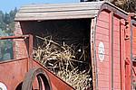 Foto Fiera del Fungo di Albareto 2007 Fungo_di_Albareto_2006_064