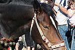 Foto Fiera del Fungo di Albareto 2007 Fungo_di_Albareto_2006_068