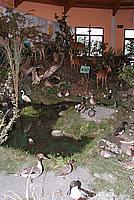 Foto Fiera del Fungo di Albareto 2009 Fungo_Albareto_09_025