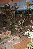 Foto Fiera del Fungo di Albareto 2009 Fungo_Albareto_09_030