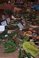 Foto Fiera del Fungo di Albareto 2010 Fungo_Albareto_2010_044