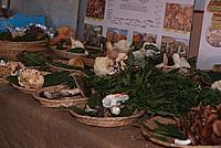 Foto Fiera del Fungo di Albareto 2010 Fungo_Albareto_2010_046
