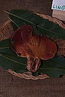 Foto Fiera del Fungo di Albareto 2010 Fungo_Albareto_2010_047