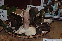 Foto Fiera del Fungo di Albareto 2010 Fungo_Albareto_2010_050