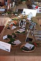 Foto Fiera del Fungo di Albareto 2012 Fungo_Albareto_2012_086