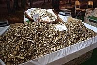 Foto Fiera del Fungo di Albareto 2012 Fungo_Albareto_2012_106