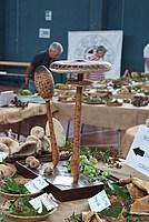 Foto Fiera del Fungo di Albareto 2013 Fungo_Albareto_2013_023