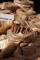 Foto Fiera del Fungo di Borgotaro 2009 Porcino_IGP_2009_042