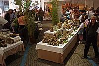 Foto Fiera del Fungo di Borgotaro 2009 Porcino_IGP_2009_085